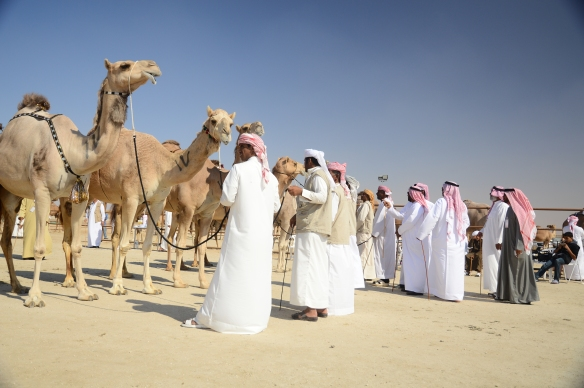 Camel Judging in Al Dhafrah